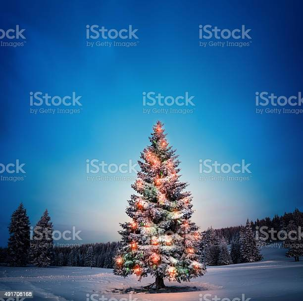 Christmas tree picture id491708168?b=1&k=6&m=491708168&s=612x612&h=8jstrfmtwilqhy8ax5flxdsxq3az7zmgqstr8bmxk60=