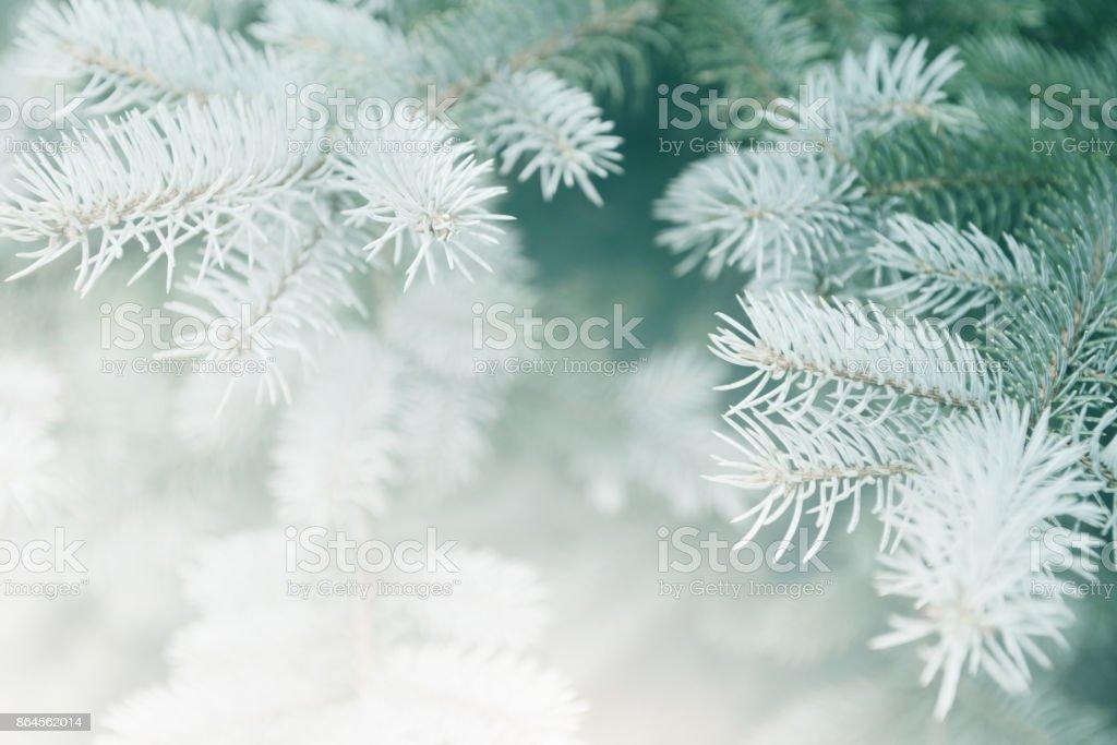Sapin de Noël - Photo