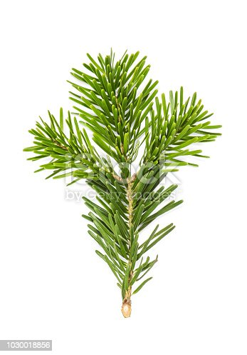 Christmas tree pine branches isolated on white background
