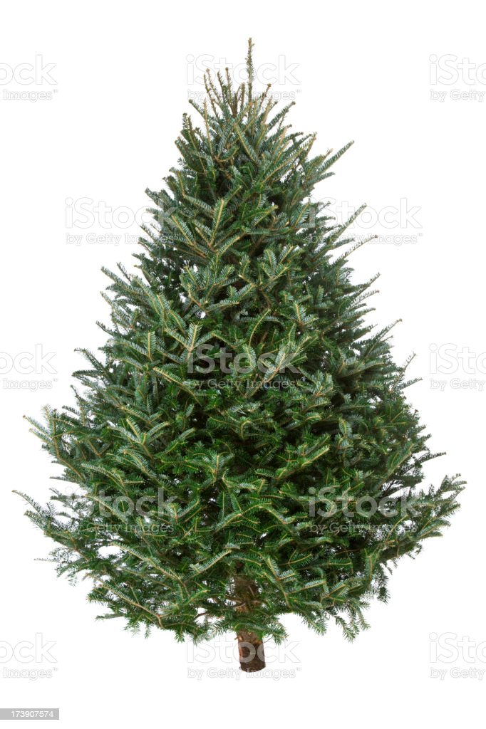Christmas Tree, Real Fraser Fir stock photo