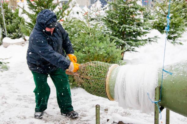 Christmas tree salesman wrapping a Christmas tree stock photo