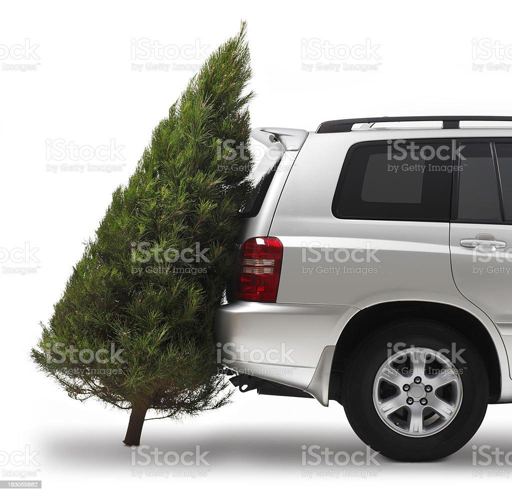 Christmas Tree Shopping royalty-free stock photo