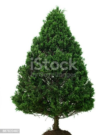 Natural Christmas Tree without Decoration. Front View with Copy Space