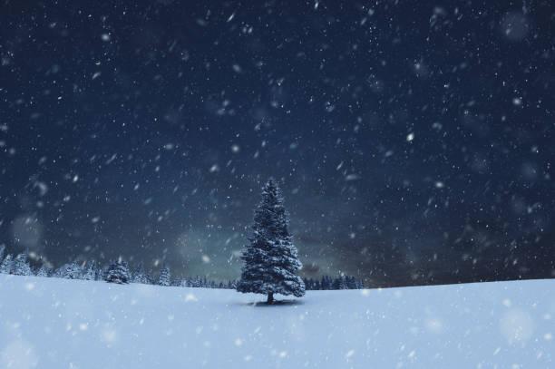 Weihnachtsbaum Schneesturm – Foto