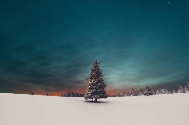 Weihnachtsbaum Sonnenaufgang – Foto