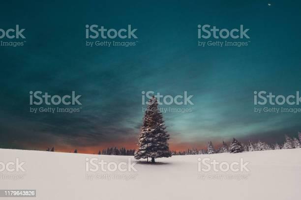 Photo of Christmas Tree Sunrise