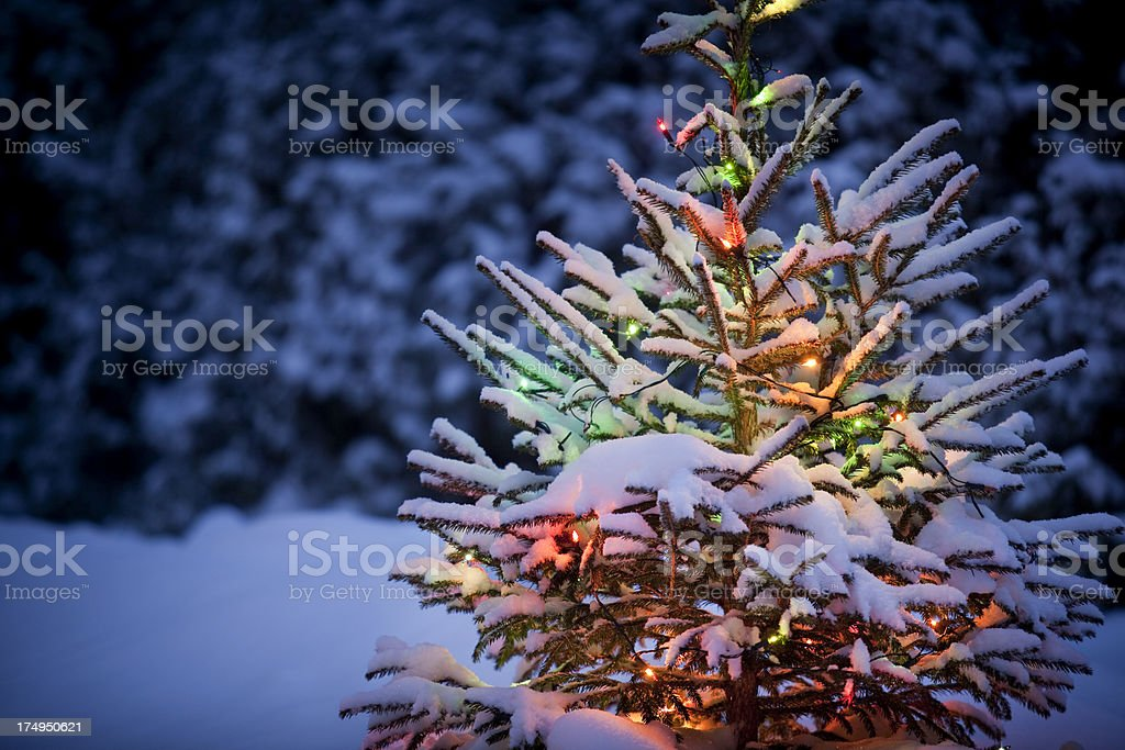 Christmas tree with fresh and fluffy snow royalty-free stock photo
