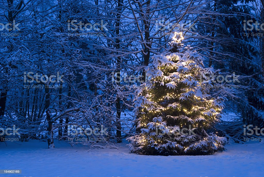Christmas Tree with lights in the Snow stock photo