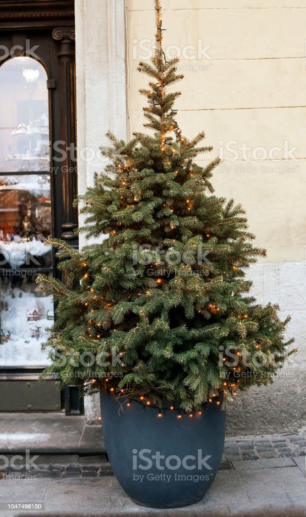 Christmas Tree With Luminous Garland In Pot Near House Stock Photo - Download Image Now - iStock