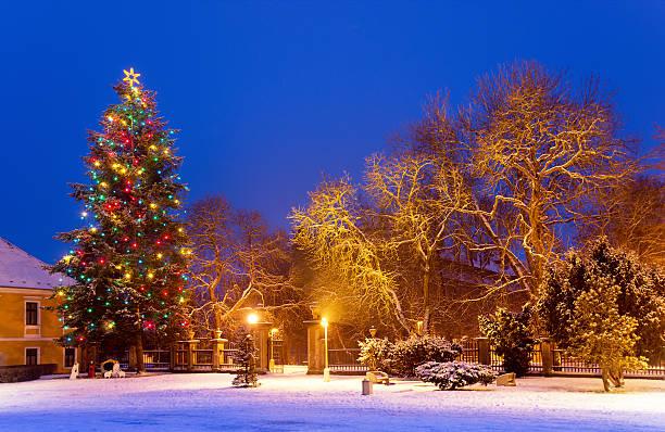 Christmas tree with snow by night stock photo