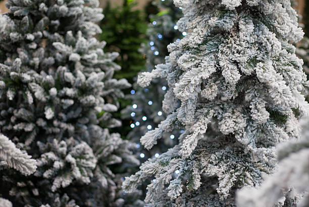 christmas tree without lights stock photo