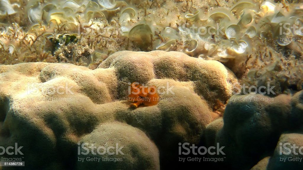 Christmas Tree Worm Red Sea Egypt Stock Photo More Pictures Of