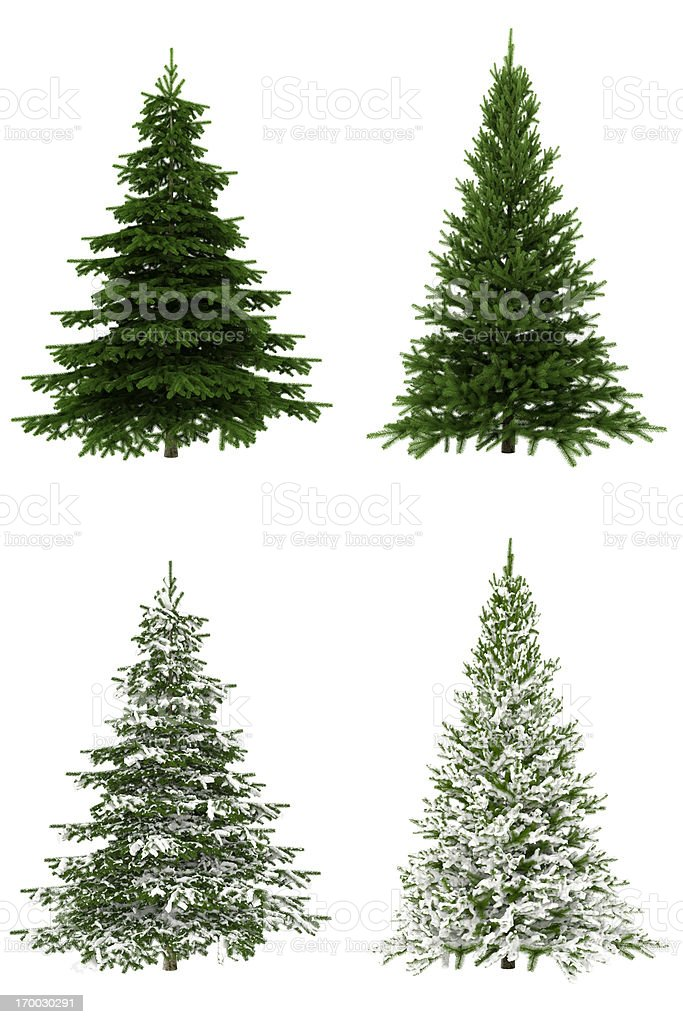 Christmas Trees COLLECTION / SET on Pure White Background (65Mpx-XXXL) royalty-free stock photo