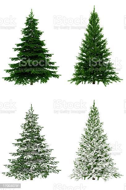 Christmas trees collection set on pure white background picture id170030291?b=1&k=6&m=170030291&s=612x612&h=7lroa83pp1vfxq4b1d7vfqvkgqu nouziehombnfbk8=