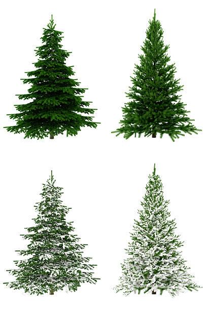 Christmas trees collection set on pure white background picture id170030291?b=1&k=6&m=170030291&s=612x612&w=0&h=il63pgx8u1ub 78sbldhegdecr1gzvav0wkxu09y7mq=