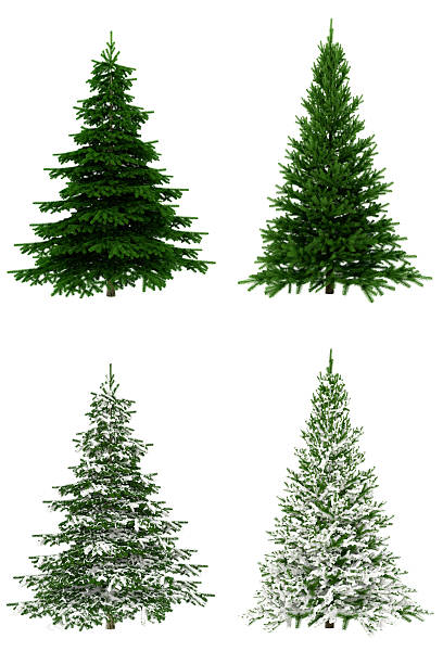 christmas trees collection / set on pure white background (65mpx-xxxl) - ladin ağacı stok fotoğraflar ve resimler