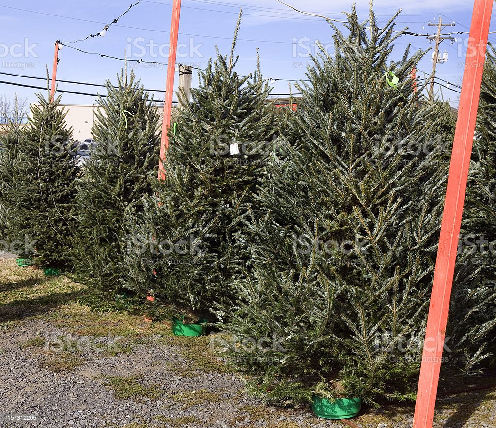 Christmas Trees for Sale Outdoor Nursery royalty-free stock photo