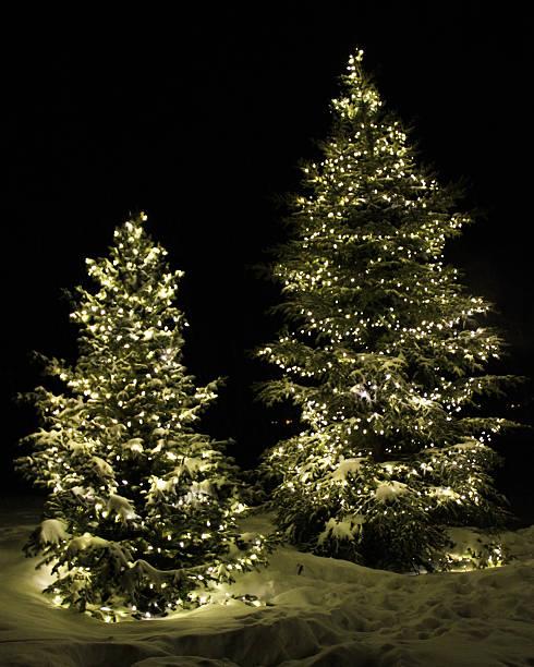 Christmas Trees I stock photo
