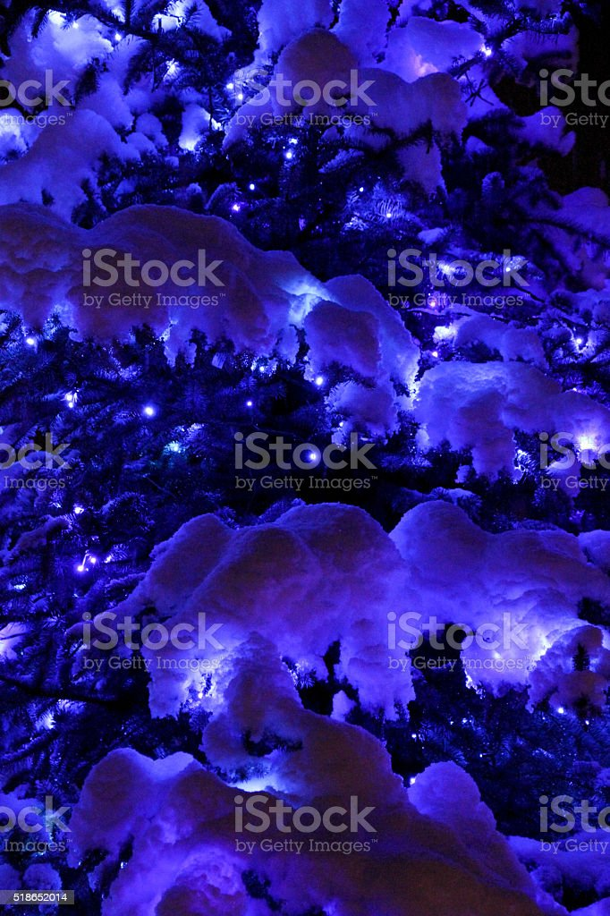 Christmas Trees II stock photo