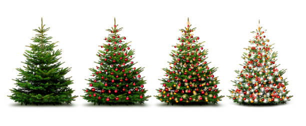 Christmas trees Christmas trees christmas tree stock pictures, royalty-free photos & images