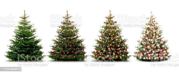 Photo of Christmas trees