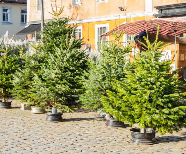 Christmas Trees Sale on Christmas Market Christmas Time December erlangen stock pictures, royalty-free photos & images