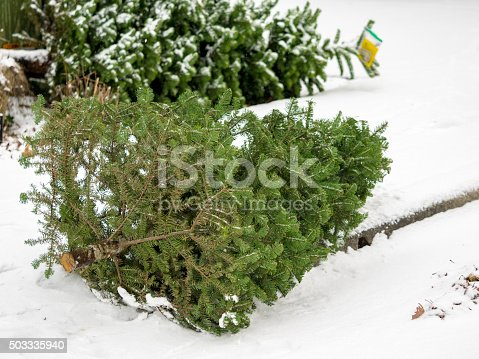 Two Christmas trees by a curb in the snow. Waiting at street curb for pickup by a group doing tree recycling for a fundraiser.