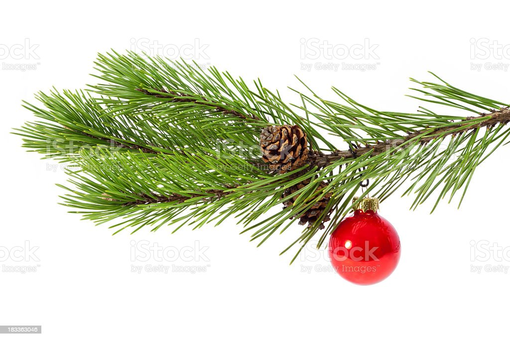 Christmas twig stock photo