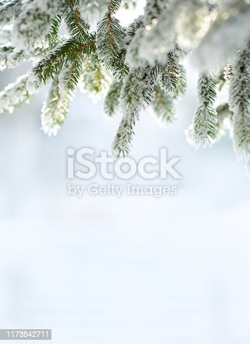 Frosted pine branches.