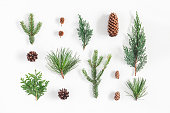 istock Christmas, winter plants on white background. Flat lay, top view 868071940