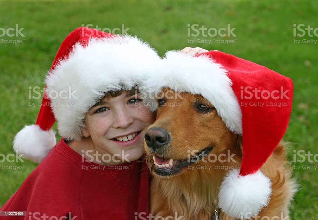Christmas with the Dog royalty-free stock photo