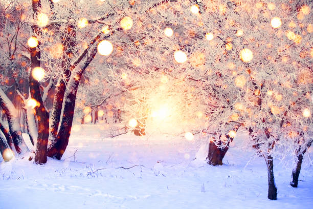 christmas wonderland - non urban scene stock pictures, royalty-free photos & images