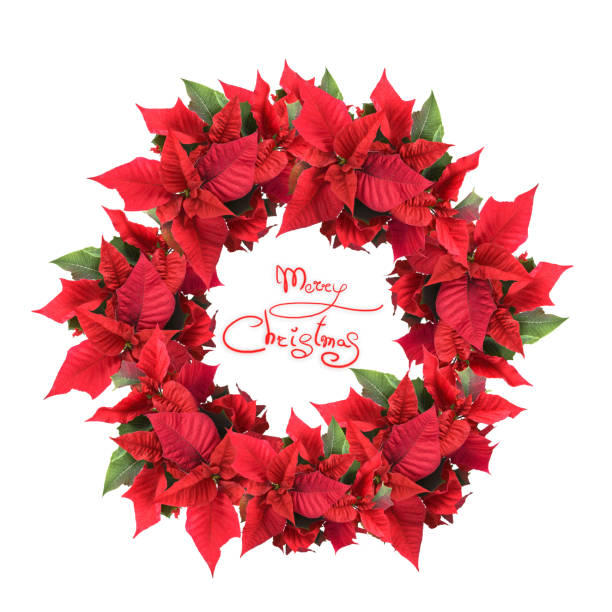 christmas wreath from poinsettia stock photo