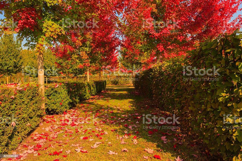 chromatic magic of the autumn Lizenzfreies stock-foto