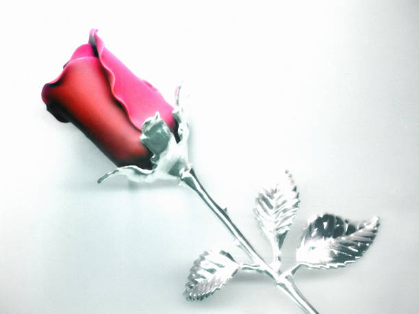 Chrome Rose-2 stock photo