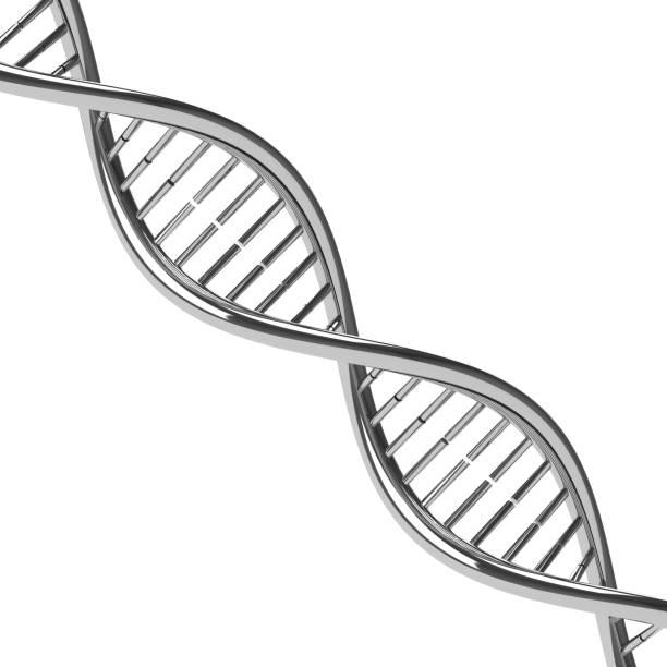 Chromed DNA molecule stock photo