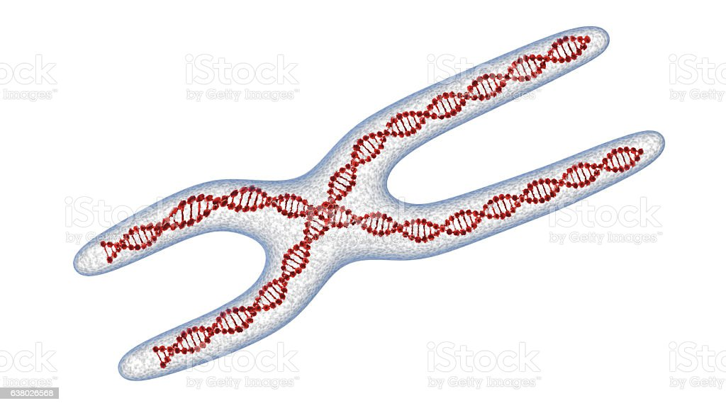 X chromosome . 3D render isolated stock photo