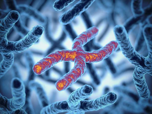 chromosoom 3d rendering illustratie - chromosoom stockfoto's en -beelden
