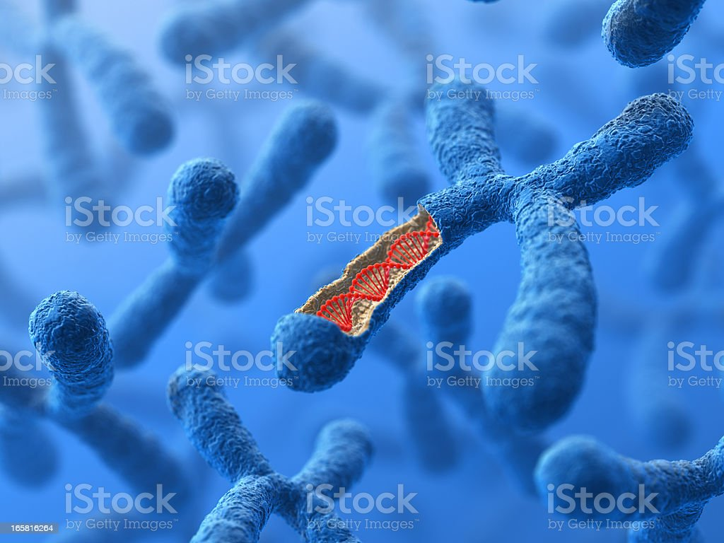 Chromosome. DNA royaltyfri bildbanksbilder