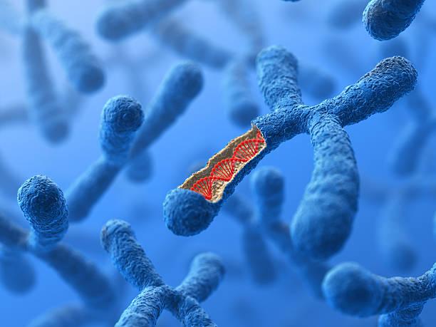 cromosoma. el adn - investigación genética fotografías e imágenes de stock