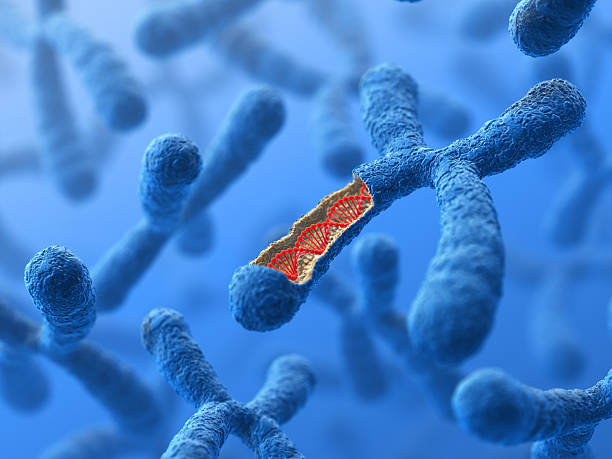 chromosome. dna - genetic research stock pictures, royalty-free photos & images