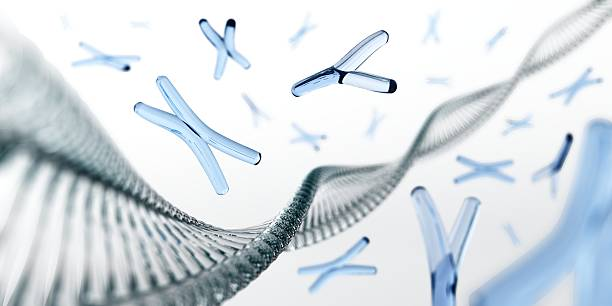 chromosome. dna. . - genetic research stock photos and pictures