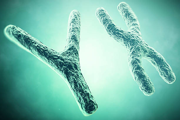YX Chromosome in the foreground, a scientific concept. 3d illustration - foto de stock