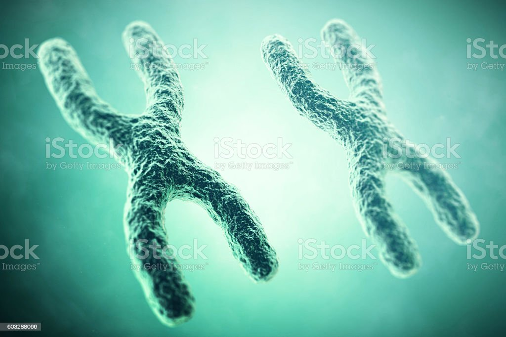 XX Chromosome in the foreground, a scientific concept. 3d illustration stock photo