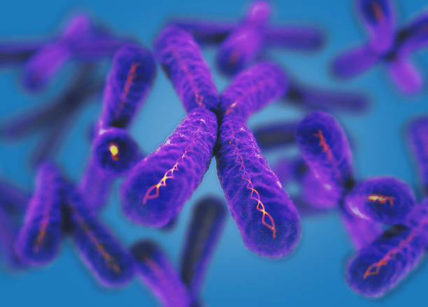 Chromosome, X. 3d illustration. - foto de stock