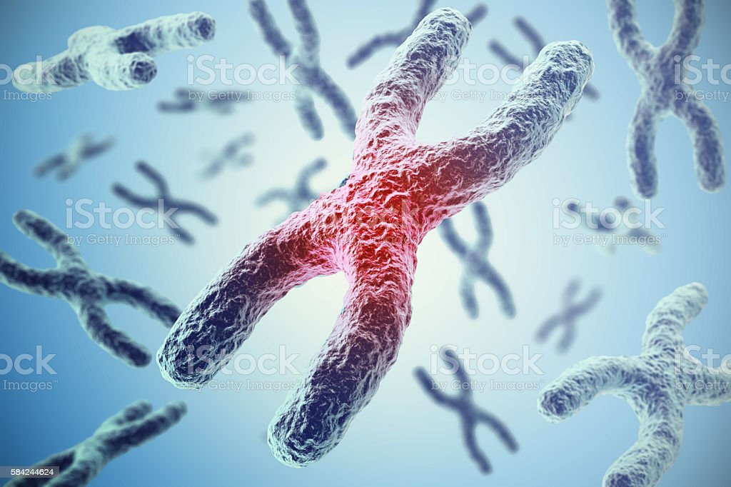 Chromosomes on blue background, scientific concept 3d illustration stock photo