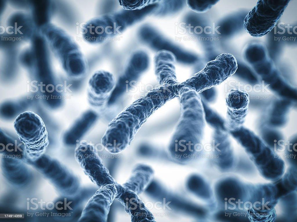 Chromosomes royalty-free stock photo