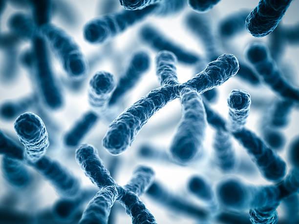 Chromosomes stock photo