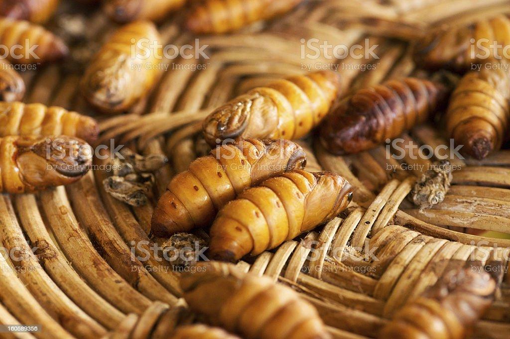 chrysalis silkworm royalty-free stock photo