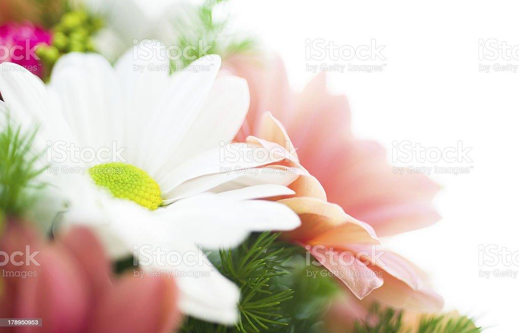Chrysanthemum bouquet close-up royalty-free stock photo